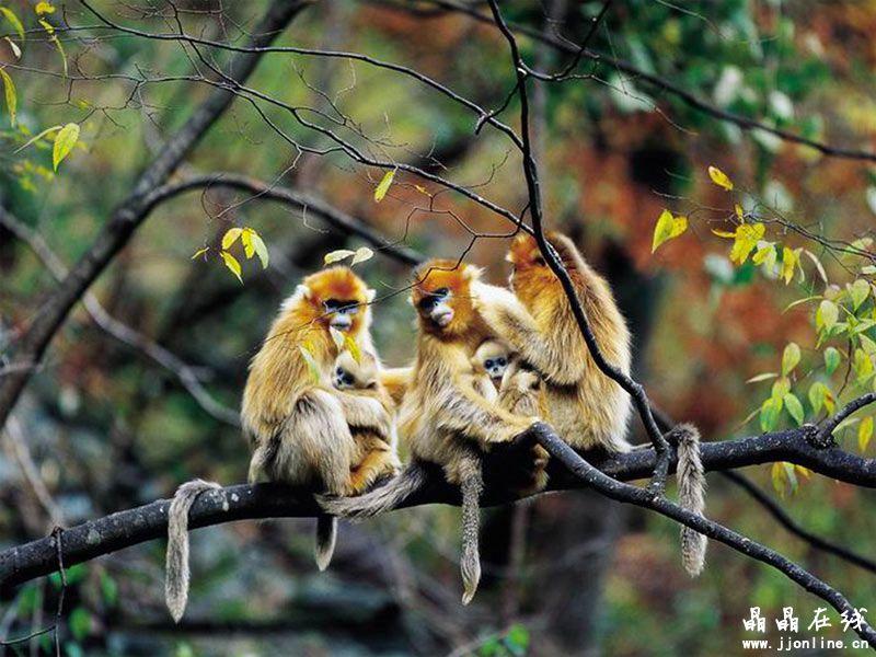 世界上十大最珍稀猴子