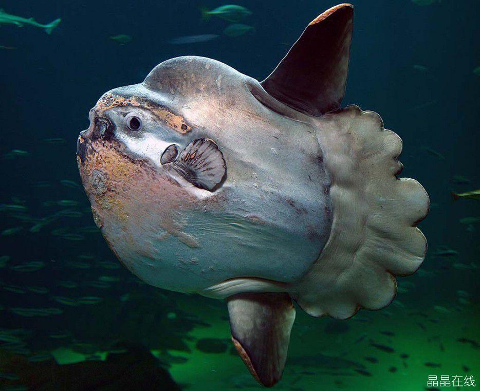 科幻电影里的海洋生物