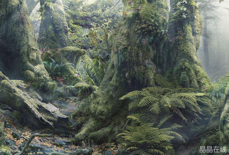 神奇的ps:热带雨林中的植物隐藏ag游戏直营网|平台