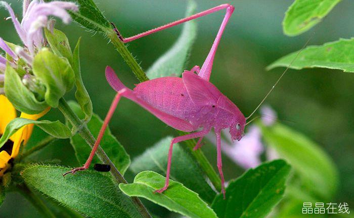 [摘要] 大自然存在的许多稀奇少见的事物让我们为之着迷,其中有一类并不常见、颜色艳丽的动物随时可以满足我们的好奇心;这些动物要么是数量稀少很难看到,要么的小概率的基因突变导致的。看这些另类小动物们,你是否也会惊叹大自然的造物之美呢?