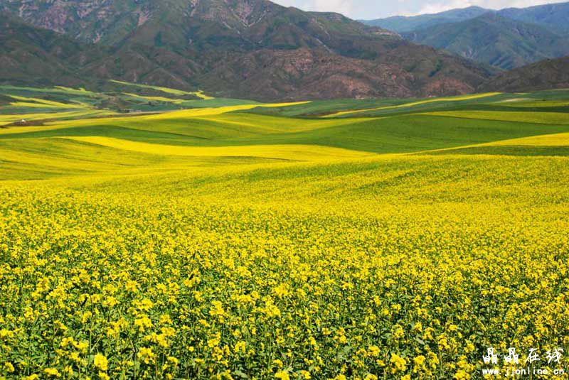 塔城市,新疆维吾尔自治区塔城地区下辖县级市