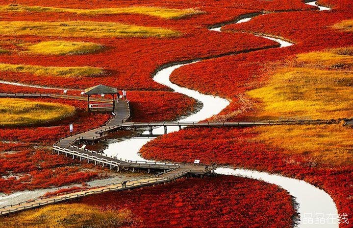 叶子会渐渐变色,有的枯萎变黄散落在地上,有的飘挂在枝头,色彩虽不像