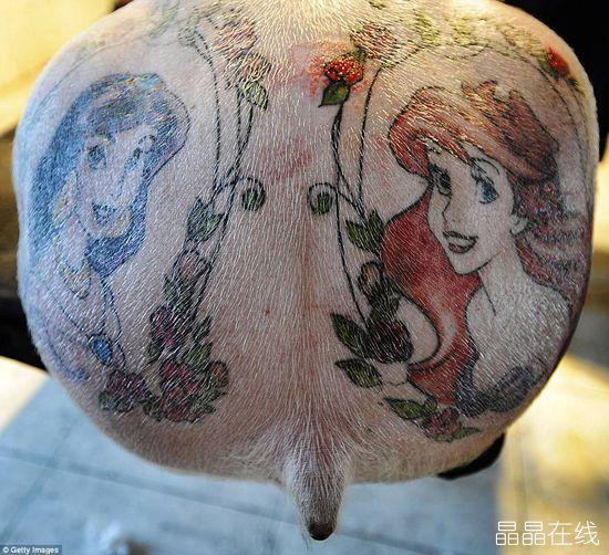 比利时艺术家为猪纹身