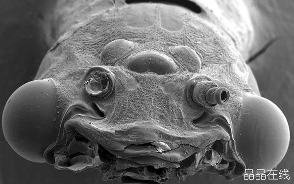 盘点全球十大最相貌丑陋的动物